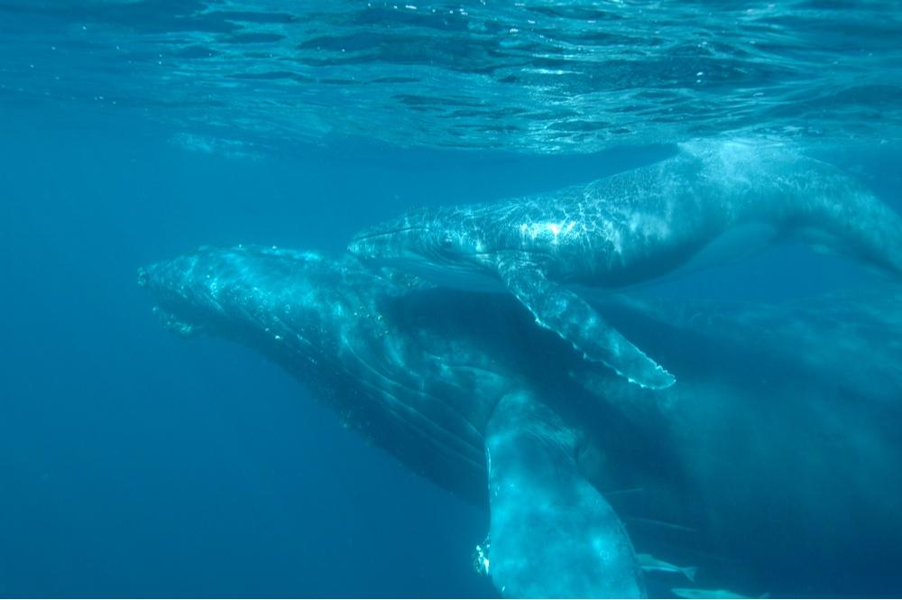 Luxury Indian Ocean Madagascar Whale Festival