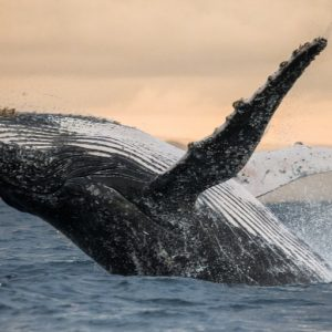Luxury Indian Ocean Madagscar Festival de Baleines